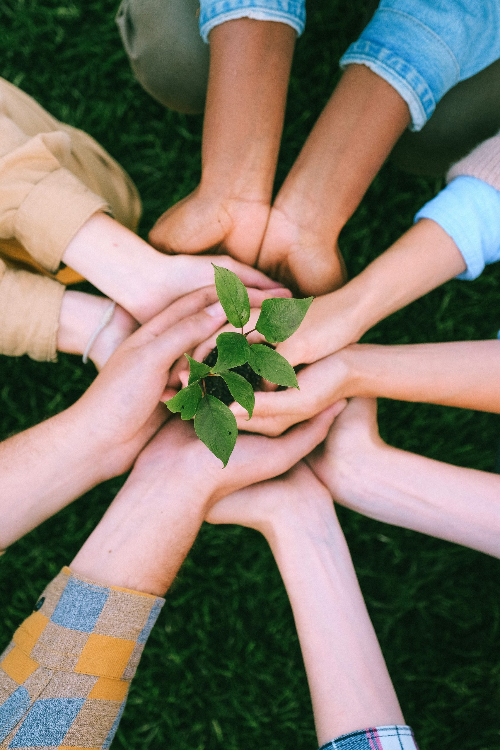 Group of hands all cupped under each other meeting in the centre of a circle, holding a small budding plant with green leaves